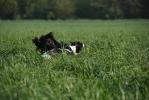 Einblicke in die Hundeschule